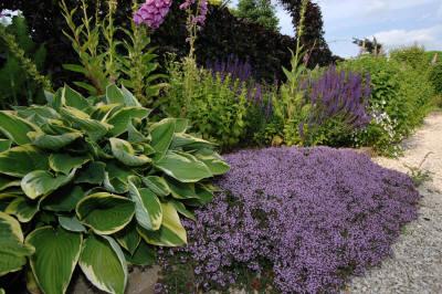 Ik wil u van harte welkom heten op de nieuwe site van tuin pepels be